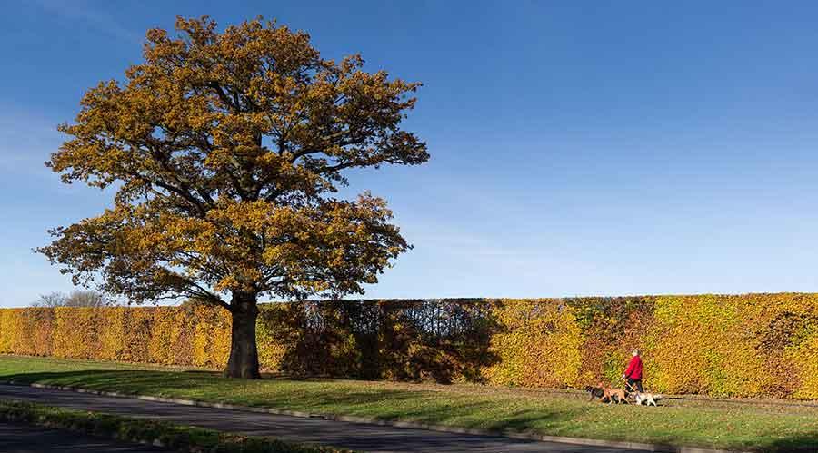 Broadhall Way in Autumn